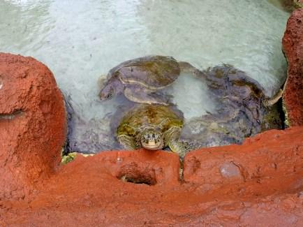 turtleedited