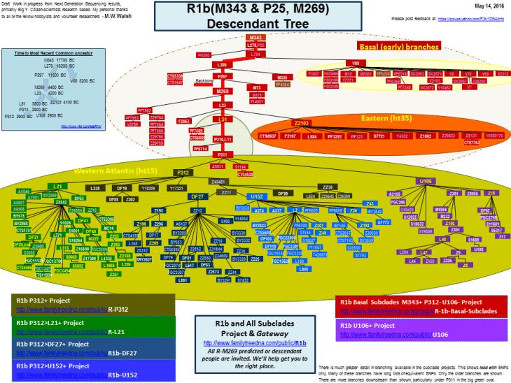 R1b Chart