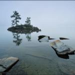Two Pine Island