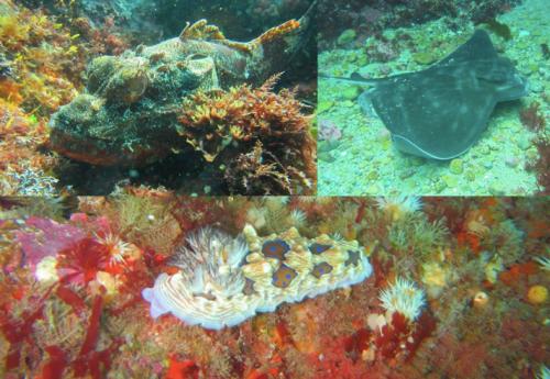 Diving Tutukaka