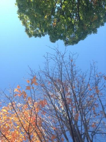 McGuffey Park - Charlottesville, VA