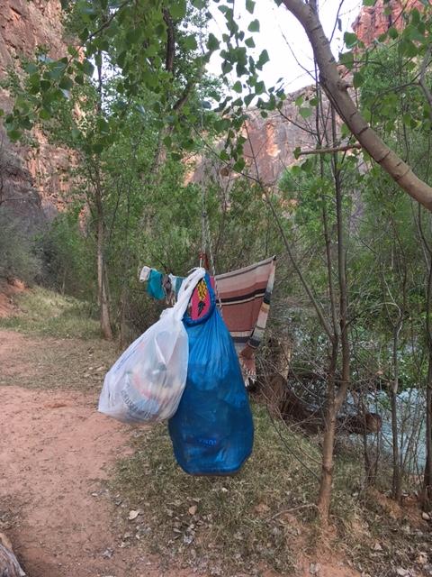 Make sure to hang your food at Havasu Falls by Wandering Wheatleys