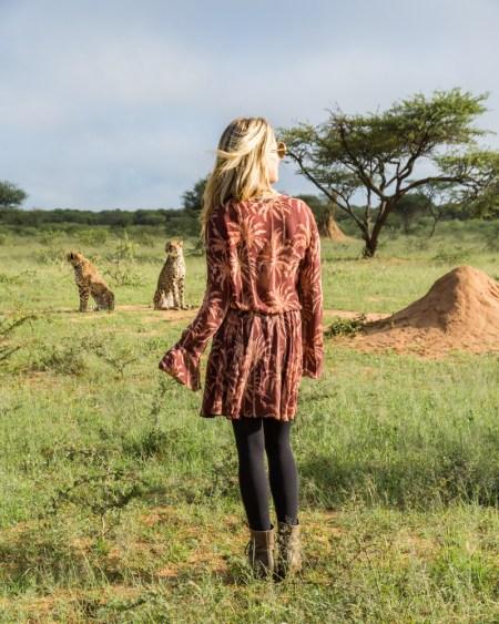 Cheetahs in Okonjima Nature Reserve, Namibia by Wandering Wheatleys