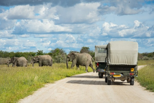 Elephant crossing in Etosha National Park, Namibia by Wandering Wheatleys