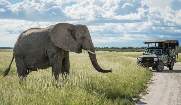 Elephant in Etosha National Park, Namibia by Wandering Wheatleys