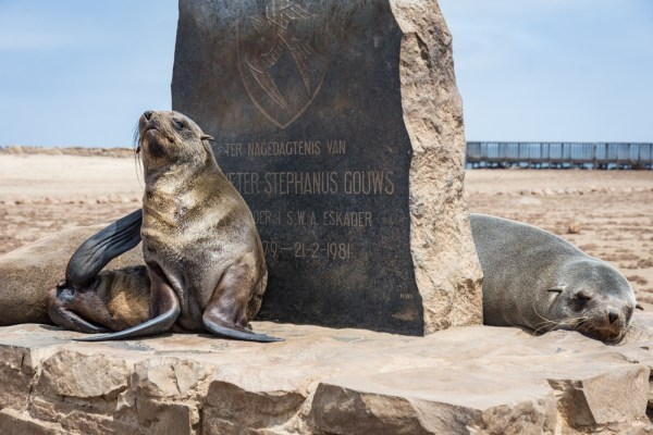 Fur Seals at Cape Cross, Skeleton Coast, Namibia by Wandering Wheatleys