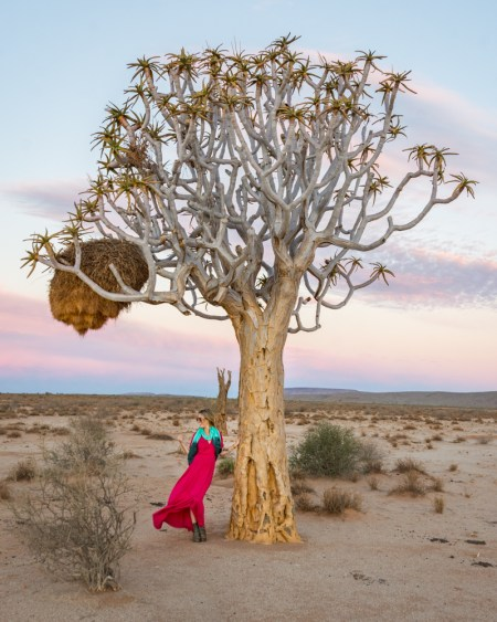 Quiver Tree at Sunset, Namibia by Wandering Wheatleys