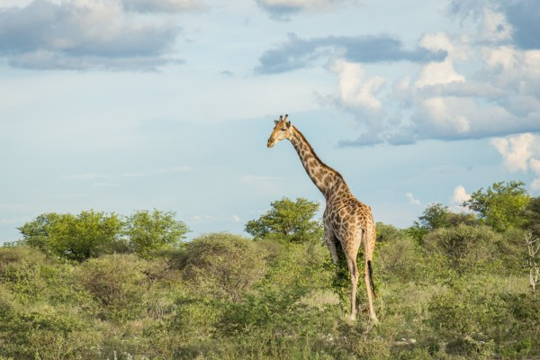 Tips for Visiting Namibia by Wandering Wheatleys