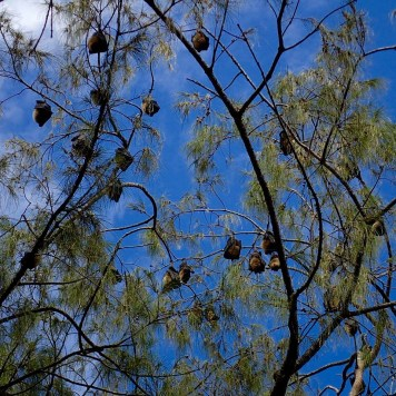 along the way: fruit bats