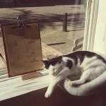Nieuw geopend: Kattencafé Ditjes & Katjes
