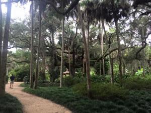 Washington Oaks Park 2