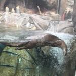 Denver Otter