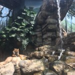 Denver Tiger