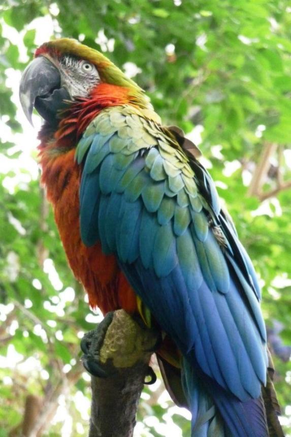 Parrot Winter