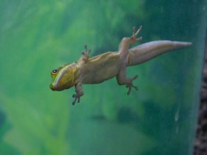 Winter Zoo - Gecko 2