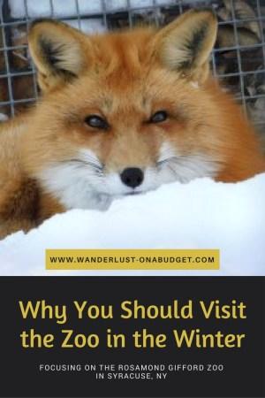 Winter at the Zoo - Syracuse - Rosamond Gifford Zoo - www.wanderlust-onabudget.com