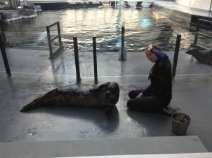 Atlanta Seal