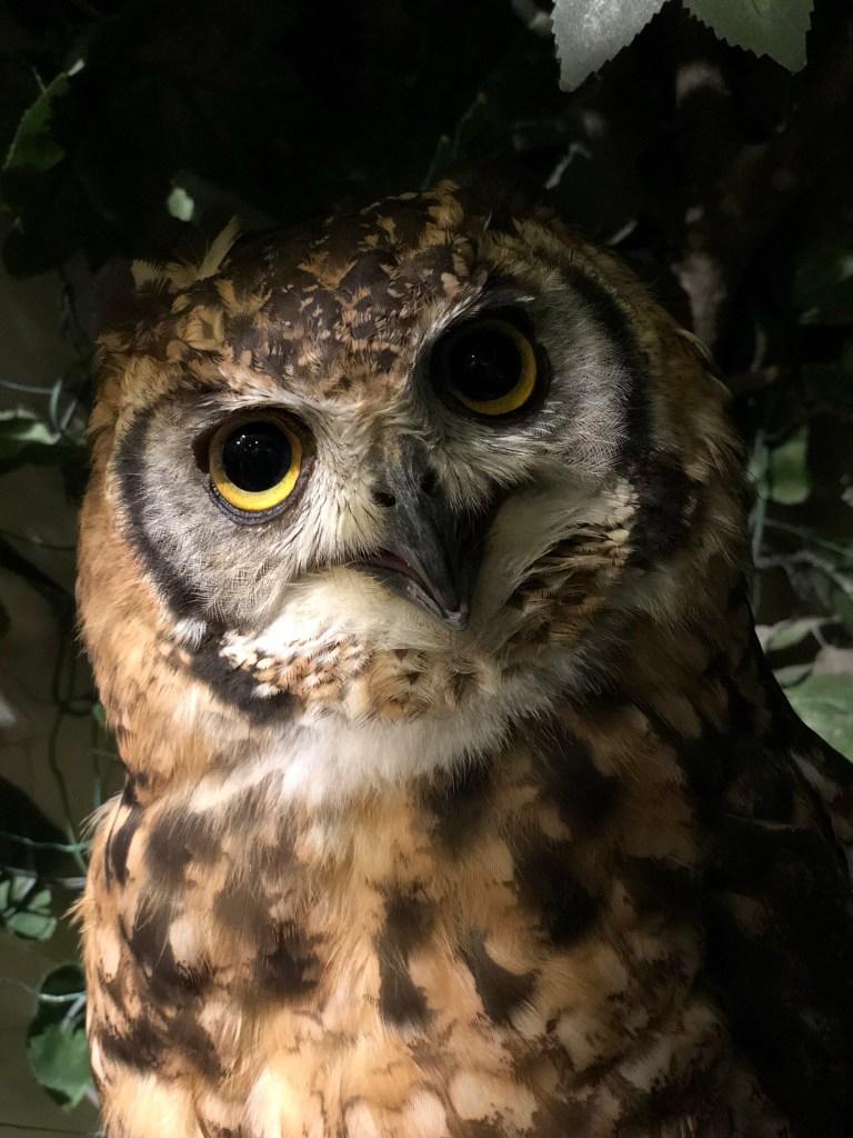 Japan - Owl Forest
