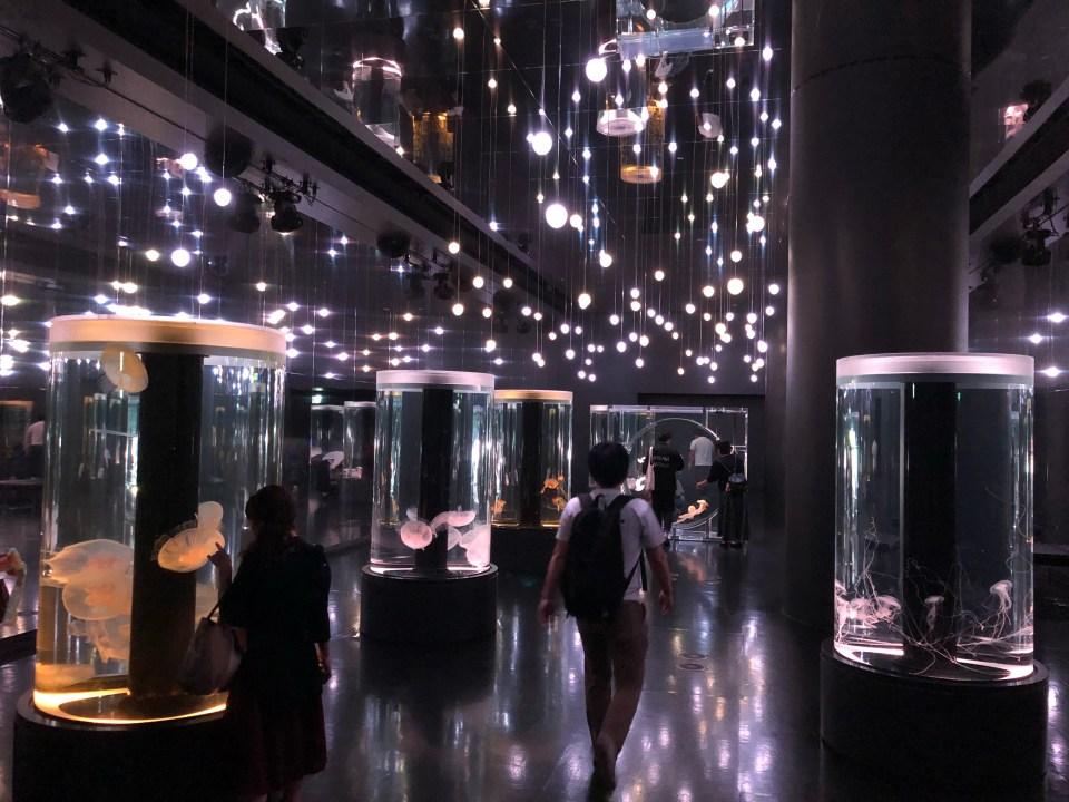 Japan - Maxell Aqua Park Jellyfish
