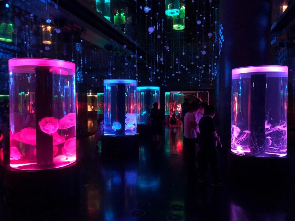 Japan - Maxell Aqua Park Jellies