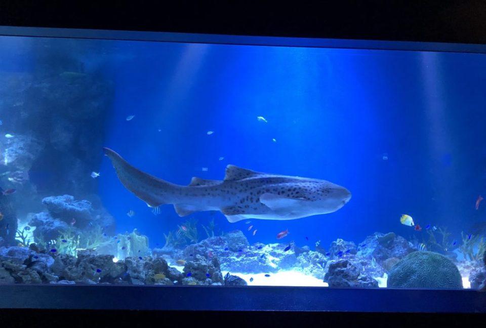 Japan - Maxell Aqua Park Shark