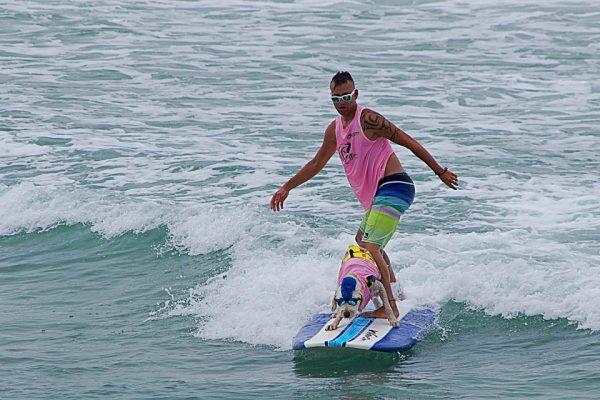 Ocean Beach Surfing Dog