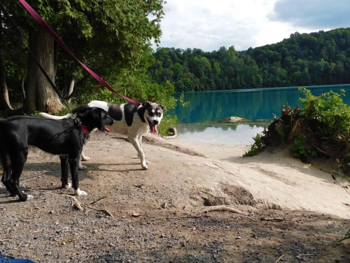 Dogs at Green Lakes