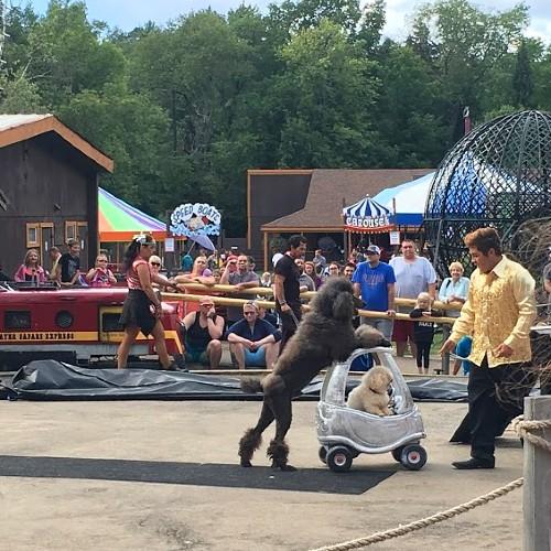 Water Safari Circus Dogs