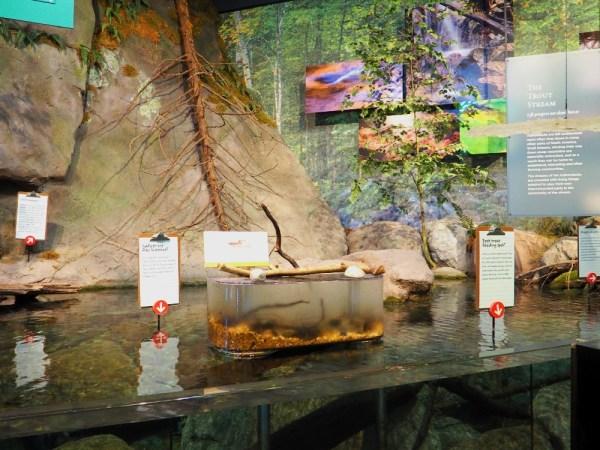 The Wild Center Exhibit 3