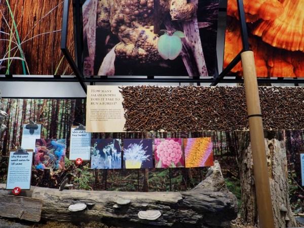 The Wild Center Exhibit 4