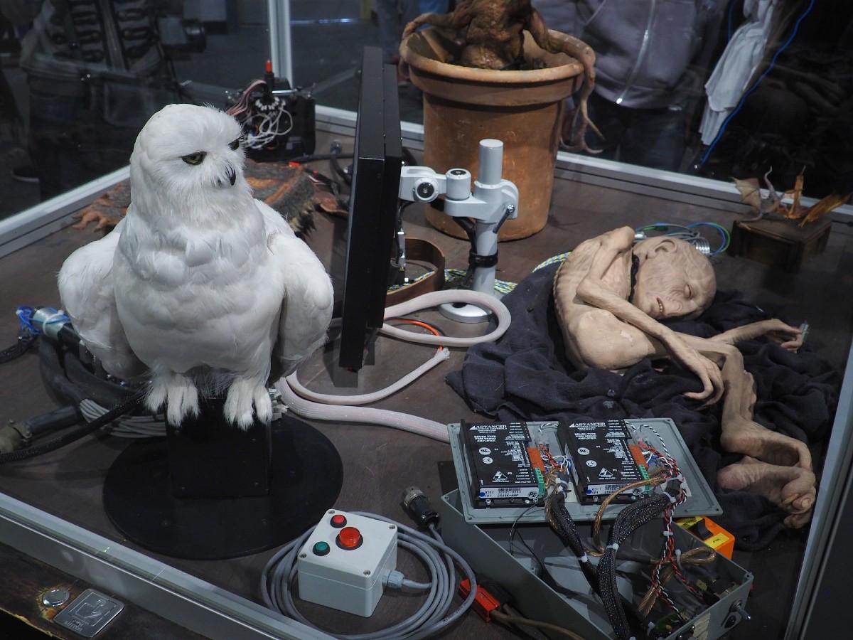 Harry Potter Studio Tour - Hedwig
