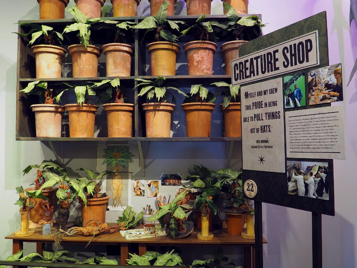 Harry Potter Studio Tour - Plants
