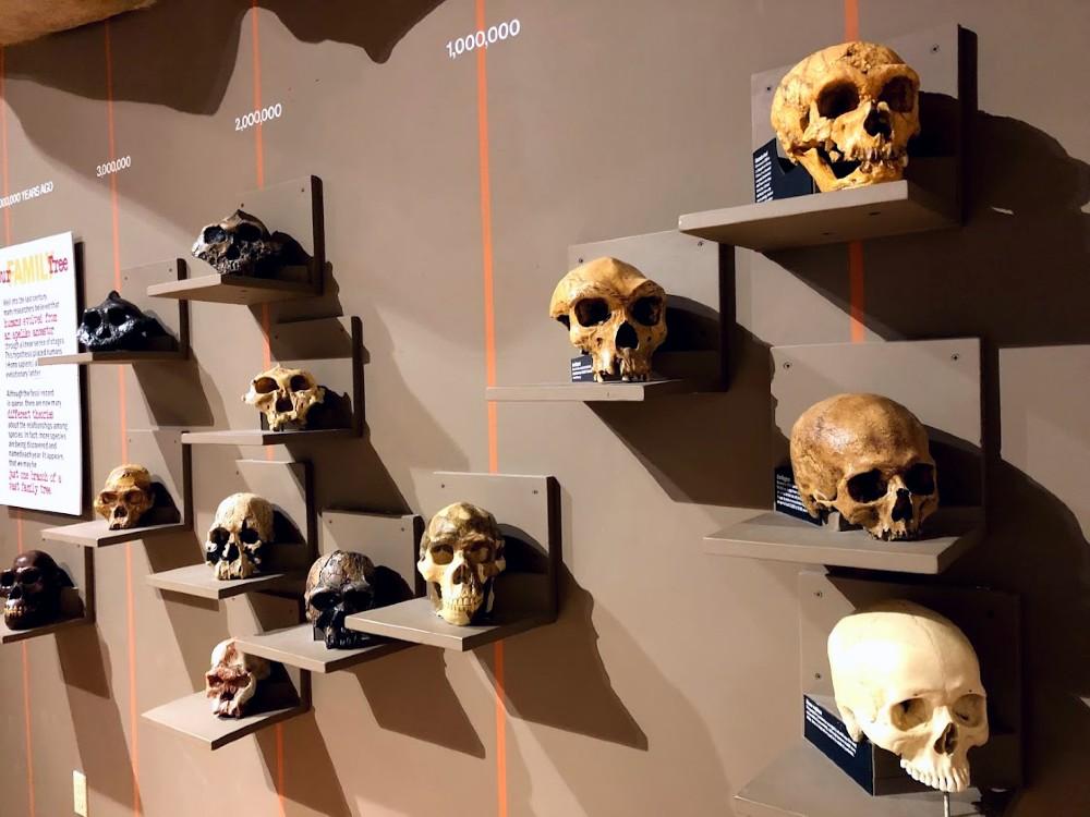 Roberson Museum Skulls