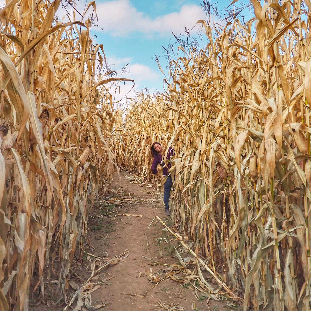 Fly Creek Valley Corn Maze Path