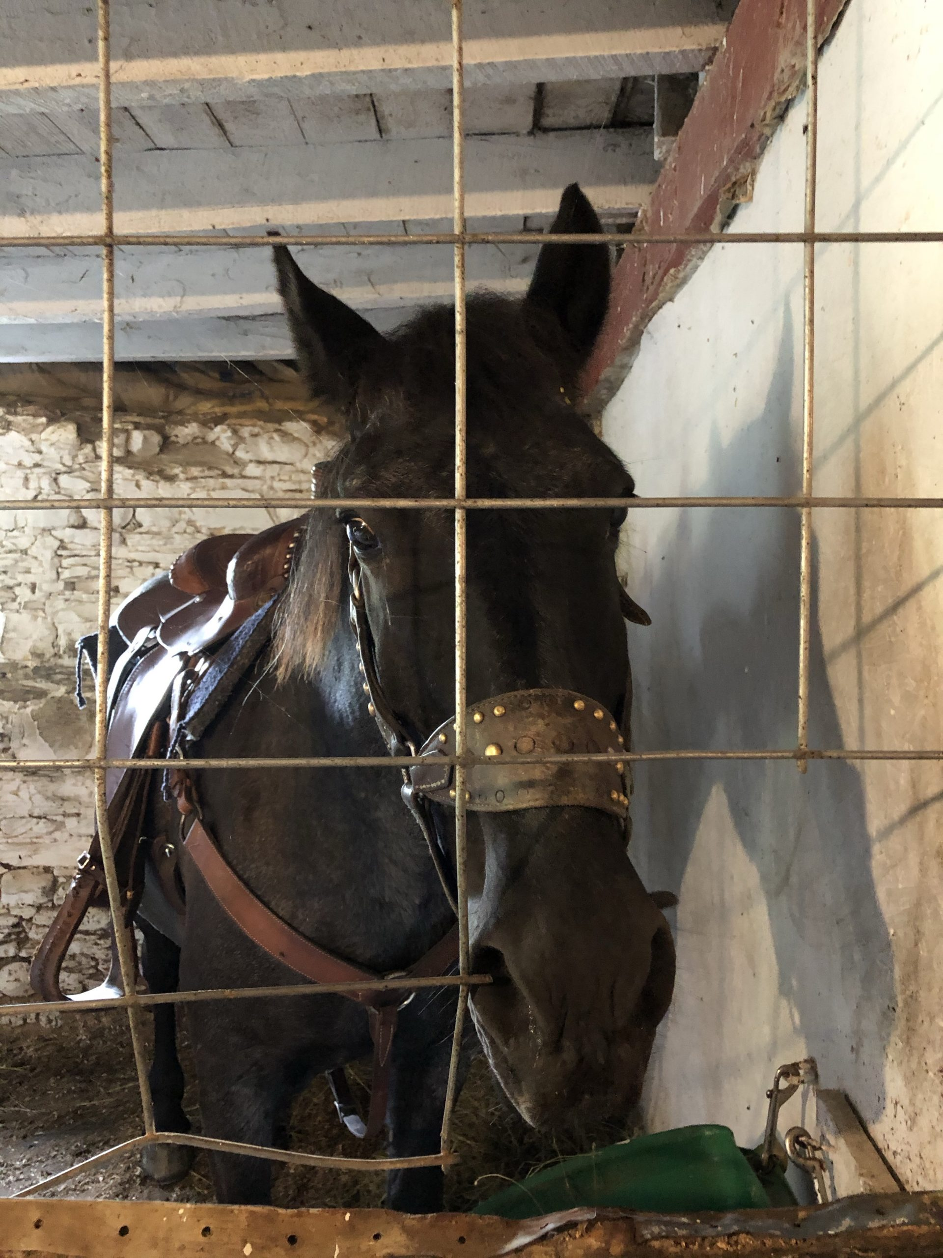 Patchwork Horseback Riding - Blue
