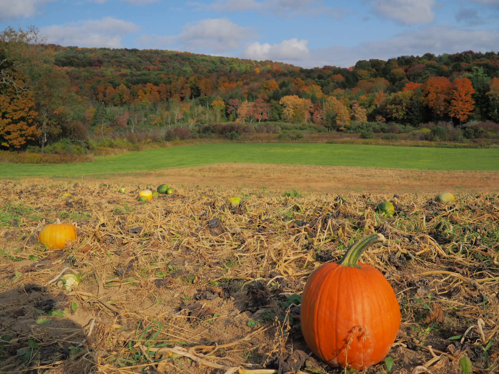 View from Fly Creek Valley Corn Maze