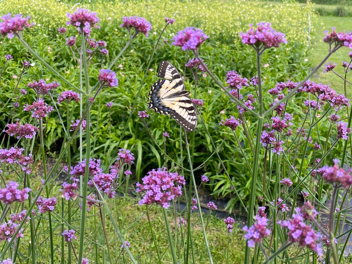 Withy Hollow Flowers and Butterfly