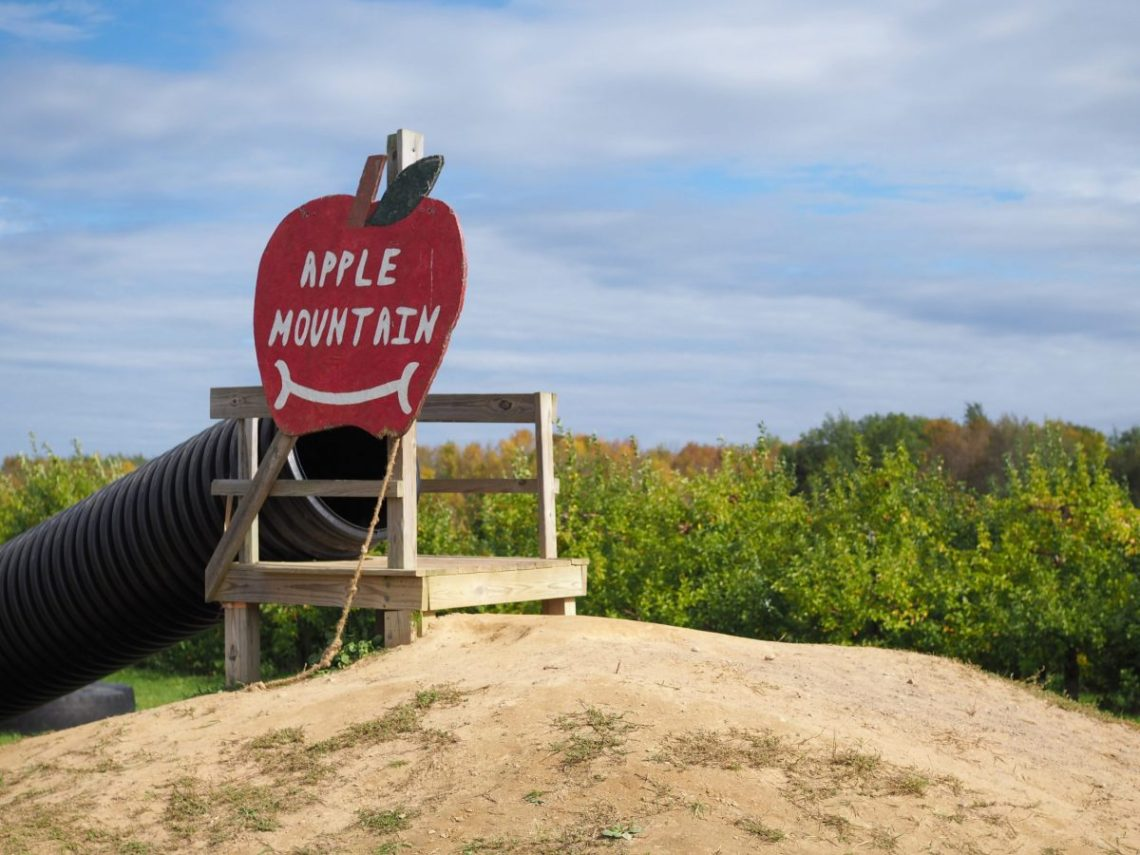 Apple Picking in Oswego