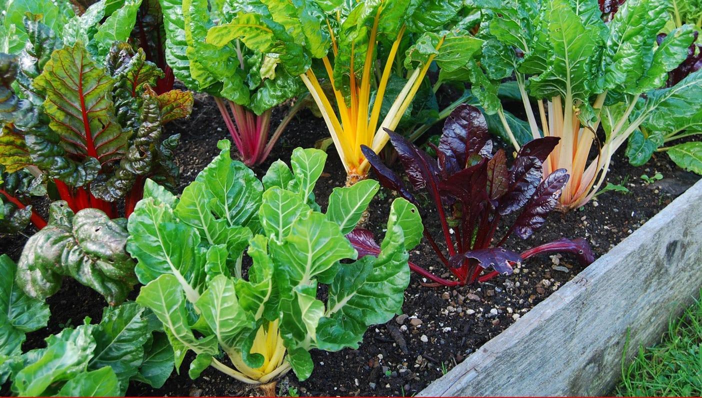 Wanderlust For Soil's Sake: The Case for Organic Gardening on Gardening  id=57345