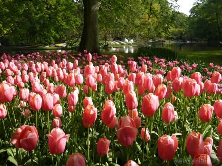 2014_0507オランダ20141370