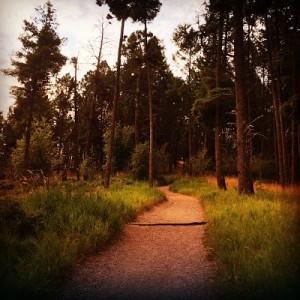 Montana Hiking Trail