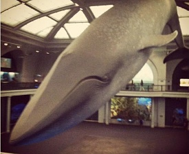 Blue Whale Museum