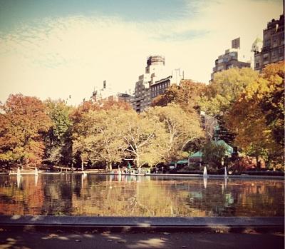 Fall Leaves NYC