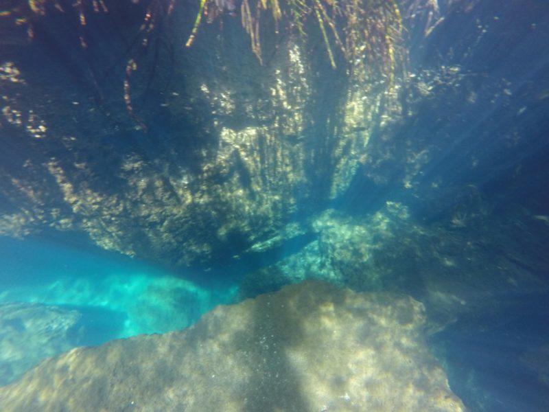 Must visit places in Playa Del Carmen! Cenotes