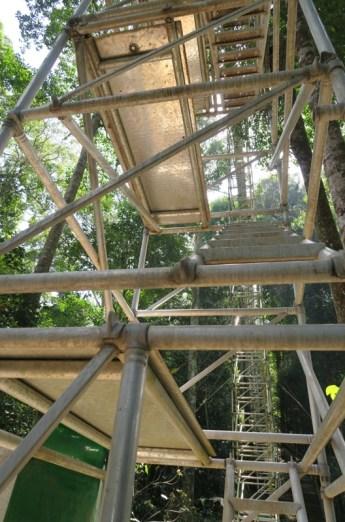 Canopy Walk