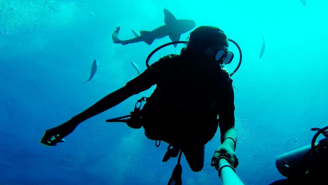 divebelize-sharks