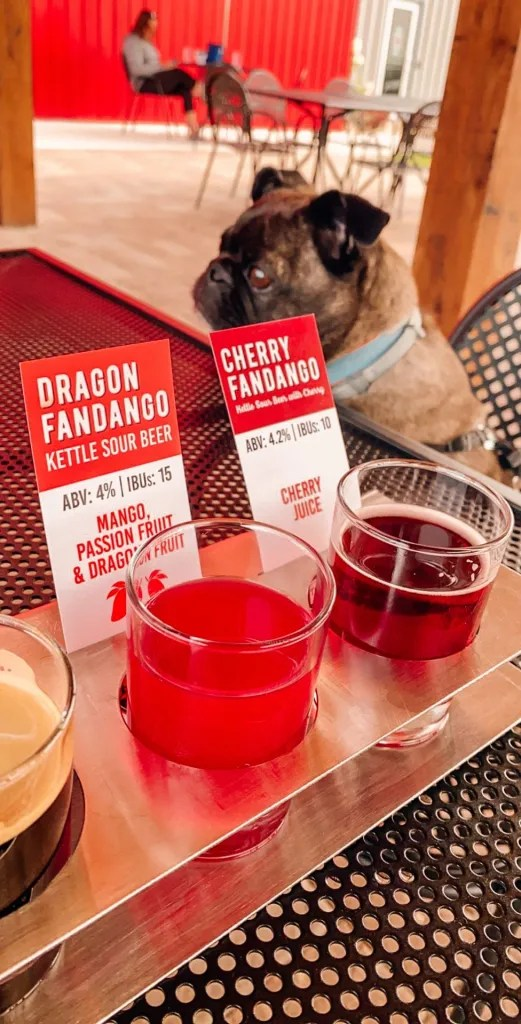 several pink and bright colored sour beers in a beer flight with a dog sitting behind it on a chair looking cute