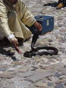 Snake charmer in Morocco, Day Trip to Tangier