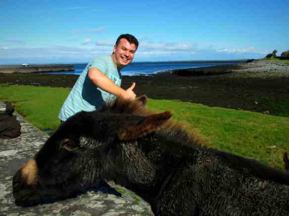 touring the west coast of Ireland, Donkeys