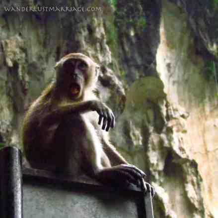 Cheeky Batu Cave monkey